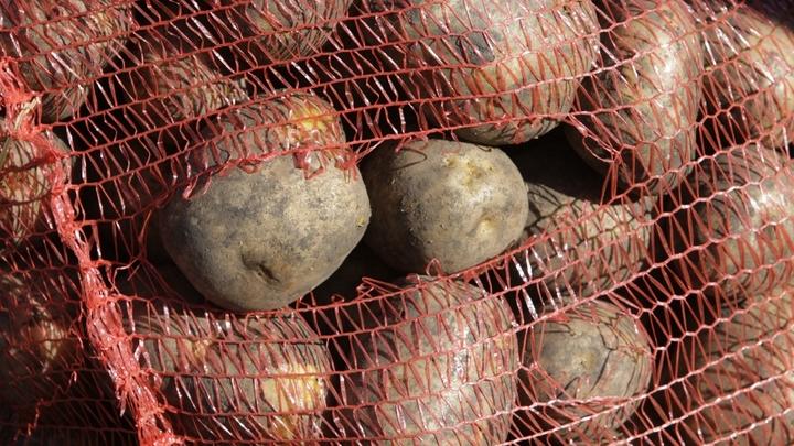 Картофель убивает: Чем опасен самый популярный у русских овощ