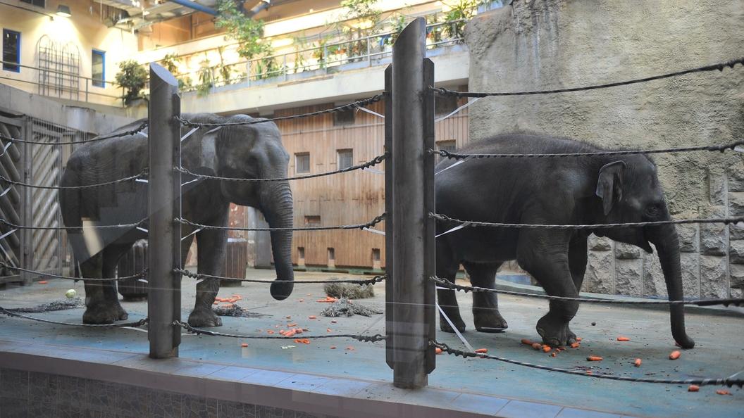 В Московском зоопарке рассказали, как развлекается новорожденный слоненок
