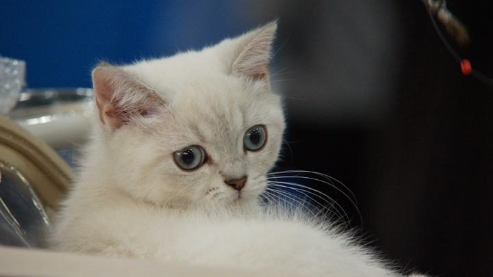 Жительница Екатеринбурга попала под уголовное дело за продажу беспородных котят
