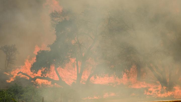 Лес в Сибири подожгли специально. Прокуратура сделала заявление