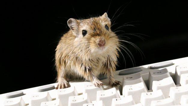 Уже не фантастика: Учёные пересадили в мышь мозг человека