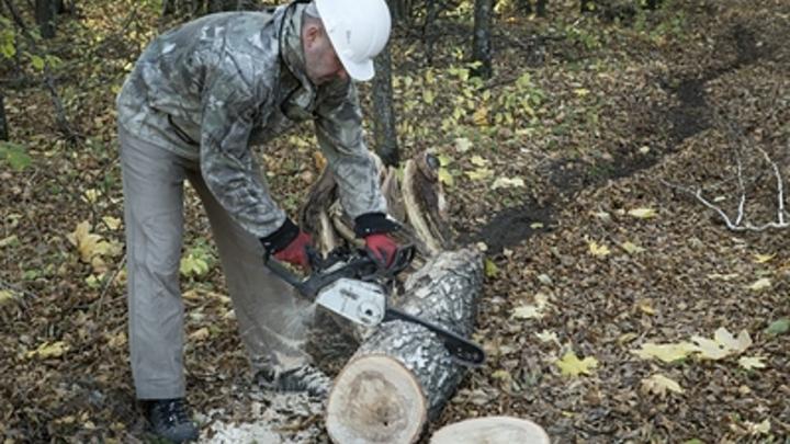 В центре Челябинске вырубили деревья под школу бокса Сергея Ковалева
