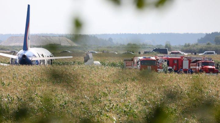 С того поля: Лётчик-герой привёз домой початок кукурузы