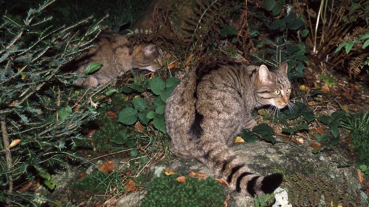 Выпускал всех на свободу: В США изолировали кота за плохое поведение