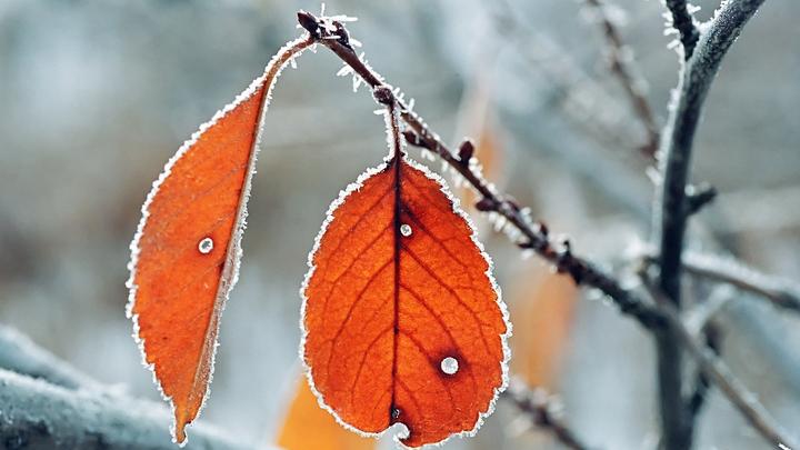 В Ростовской области ожидаются заморозки