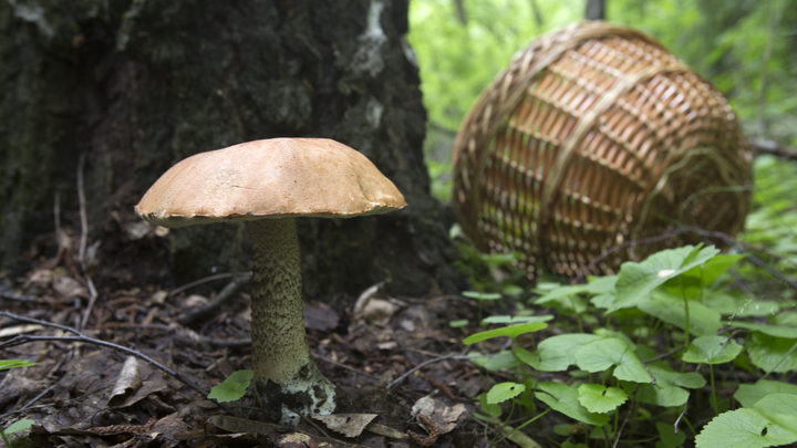 В Ивановской области нашлись сразу трое пропавших грибников