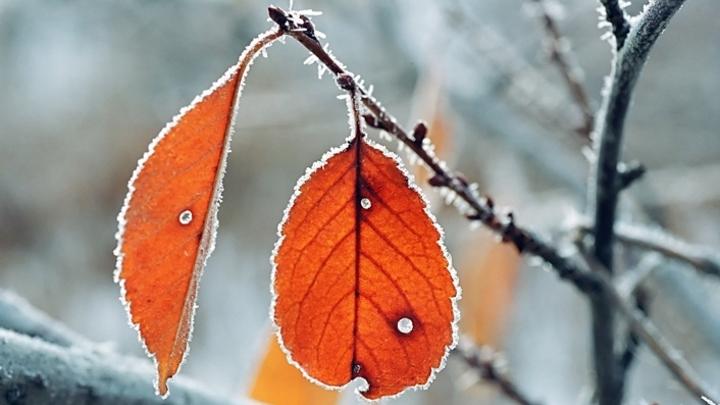 Заморозки ночью и потепление днем ждут жителей Кузбасса 15 сентября