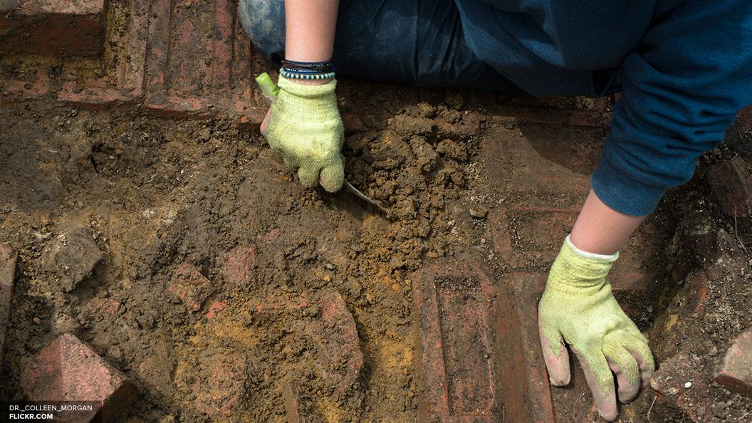 Палеонтологи рассказали, кому принадлежат найденные в Австралии следы длиной 1,7 метра