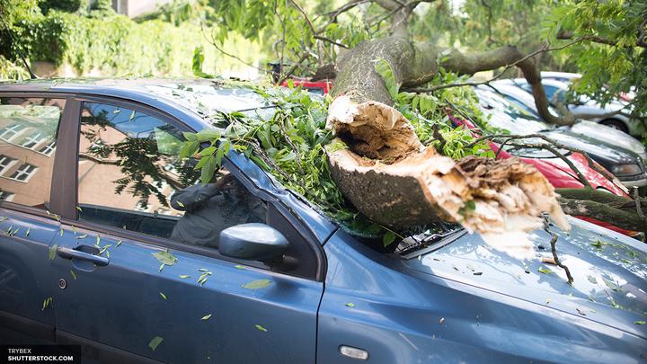 Сваленные ураганом деревья заблокировали выезд из резиденции Медведева