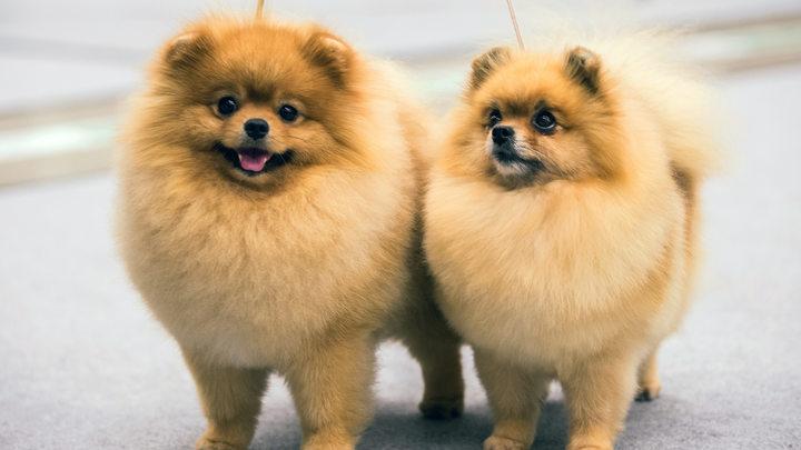 Собаки и кошки могут всю жизнь быть носителями коронавируса - ветеринар
