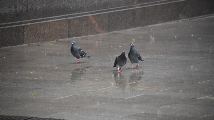 Эксперты выясняют причины загадочной массовой гибели голубей в центре Санкт-Петербурга