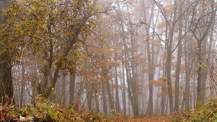 Сезон охоты в Краснодарском крае будет открыт с ограничениями