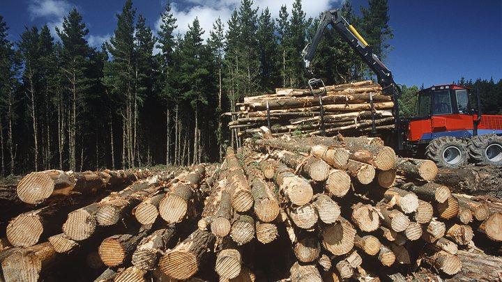 На время, чтобы новый лес вырос?: Жители России потребовали от Совфеда большей смелости по лесному эмбарго