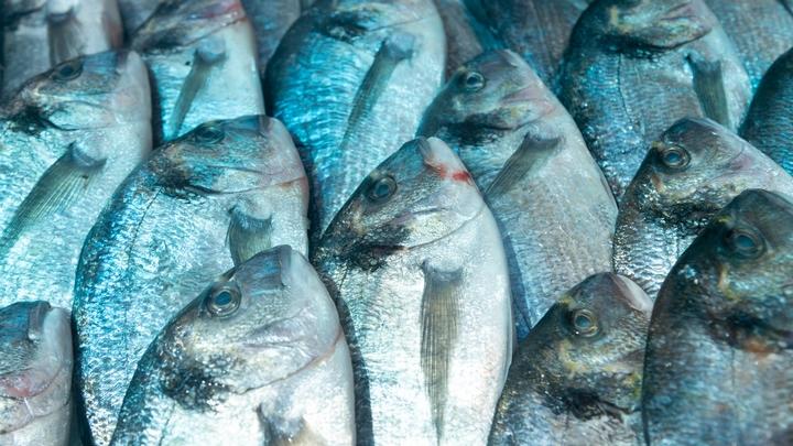 На границе с Ростовской областью задержали партию рыбы из Украины