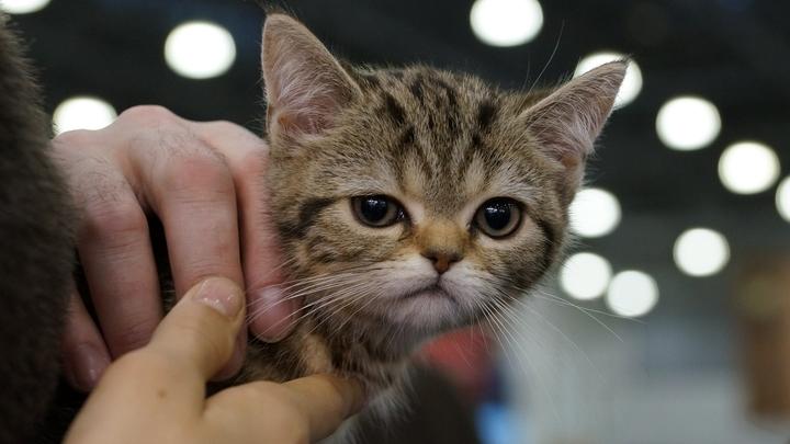 Аномальный кот с двумя мордами родился на американской ферме