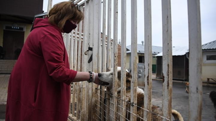 Неадекватная Верность: читинские зоозащитники раздули скандал ради хайпа?