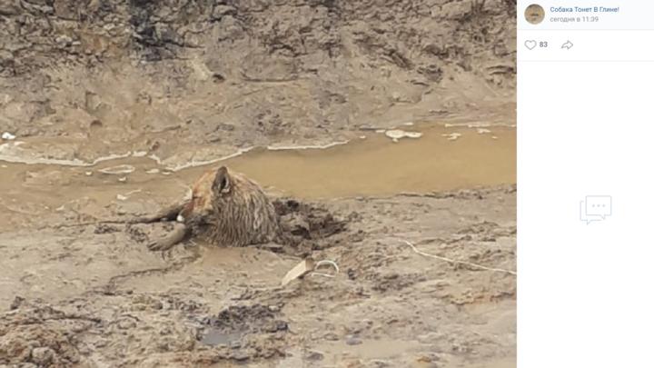 В Петербурге спасли пса, который едва не утонул в глине