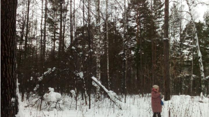 Депутат Горсовета Новосибирска беспокоится за судьбу леса у Нижней Ельцовки