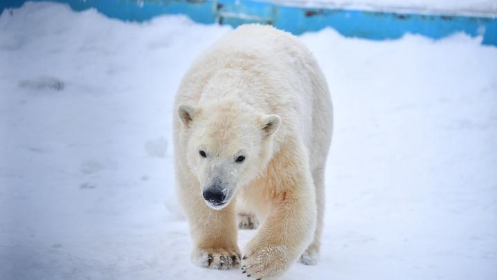 Очень страшный экскурсовод: в Норвегии оштрафовали гида, напугавшего медведя
