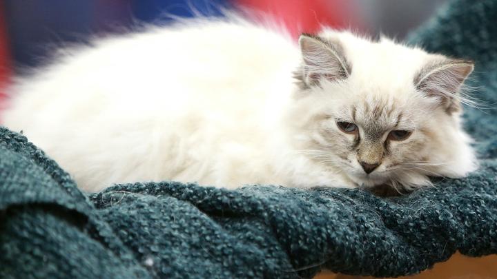 Две кошки погибли, одна получила обморожение: Аэрофлот снова в центре скандала с перевозкой питомцев