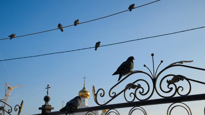 Калечат души и тела людей: На Урале разоблачили секту лжеархиепископа Варуха