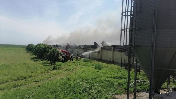 Свыше 11 тысяч свиней погибли при пожаре на ферме в Ростовской области