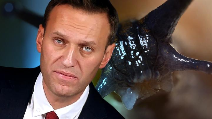 Навальный выбрал путь «слизняка»: Разбудит ли он «лихо» Золотова?