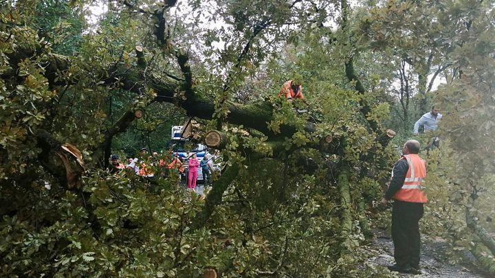 В Сочи из-за упавшего дерева перекрыли федеральную трассу