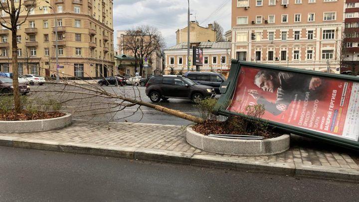 МЧС о последствиях урагана: Упало 600 деревьев, разбито более 90 авто