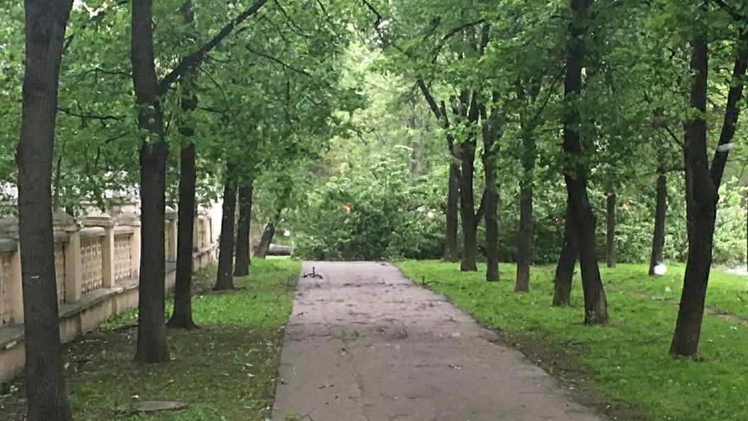 Ноу-хау от коммунальщиков: В Санкт-Петербурге озеленили деревья скотчем