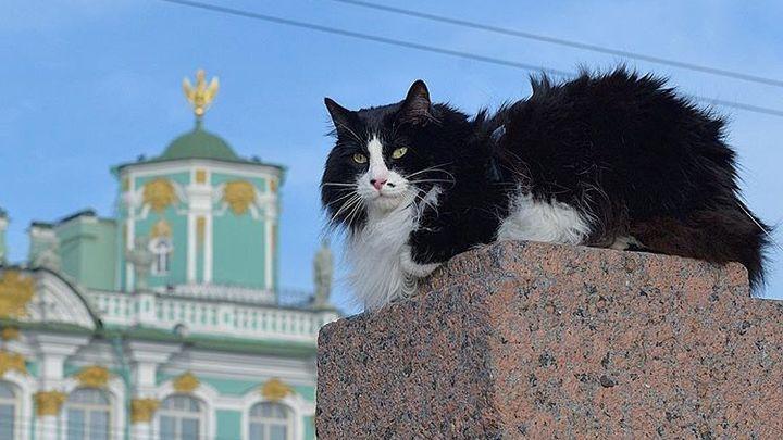 Даже депутатам стало жалко: За слишком толстого кота, которого не пускали в самолёт, заступились в Госдуме