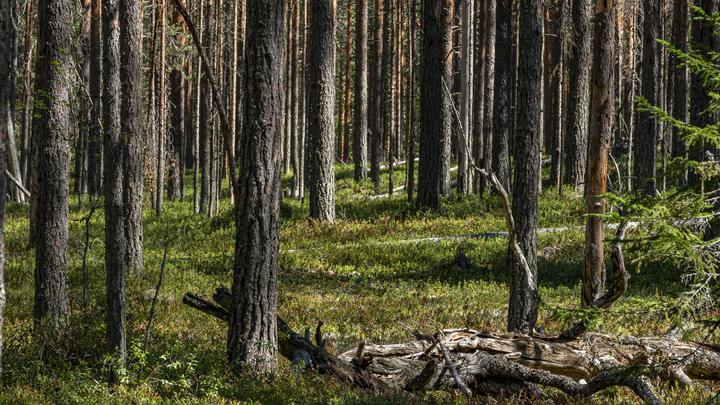 В Подмосковных лесах пропали две пенсионерки
