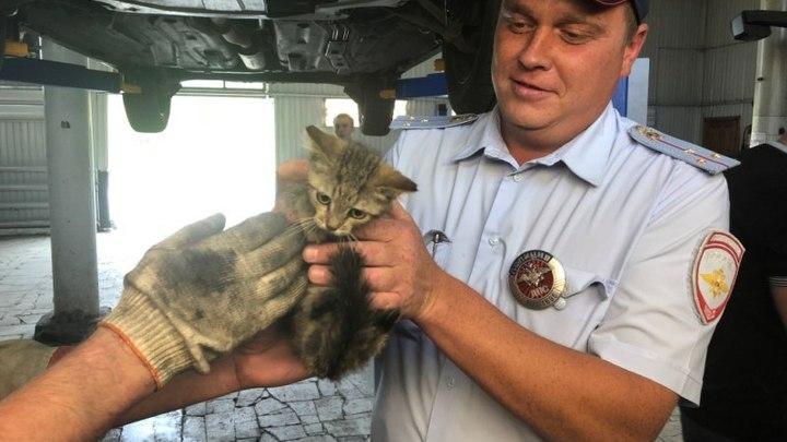 Целая спецоперация: Сотрудники самарского ГИБДД спасли жизнь бездомному котенку