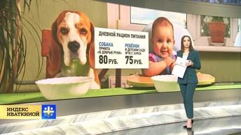 Собачья жизнь: ребёнок в детском саду ест хуже дворняги