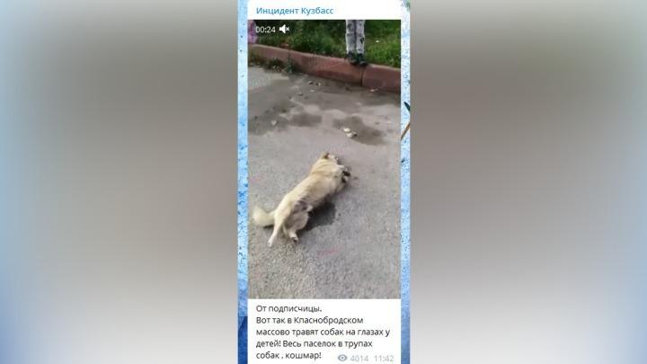 Умирала в муках: полиция разыскивает отравителя собак в Кузбассе