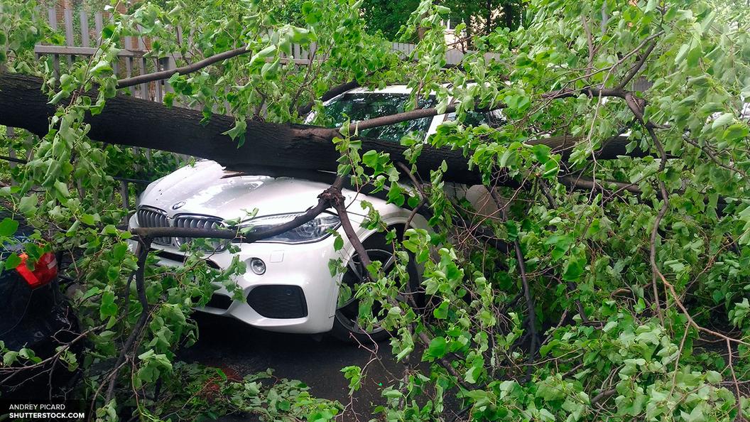 Ущерб от урагана в Москве оценили в 25 миллионов рублей