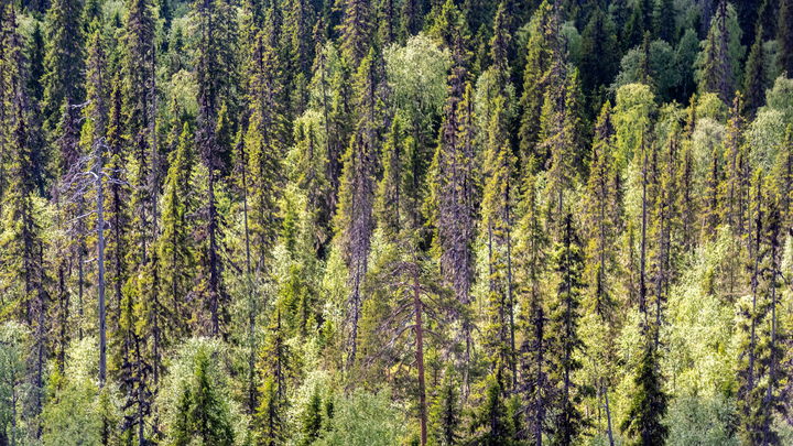 Манипулирование статистикой: В WWF пообещали России жизнь без леса в ближайшее 10-летие, поспорив с официальными данными