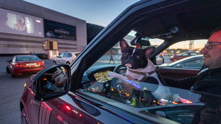 Как по компасу: Феномен, как собаки находят хозяев за сотни километров, раскрыт