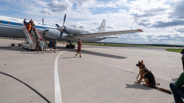 Ваша собака - для нас чемодан: Авиаперевозчик потерял пса российской пассажирки, летевшей в Берлин