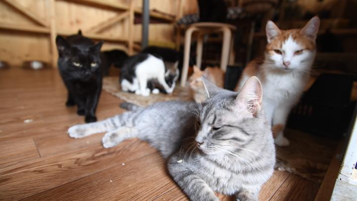 На уровне генетики: Зоолог рассказала о панических страхах кошек