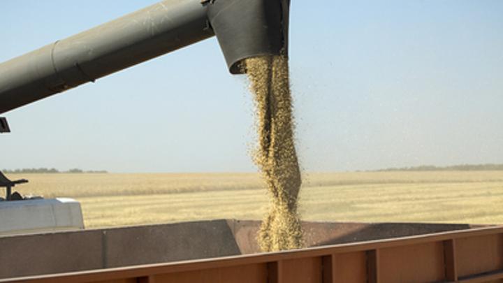 Ущерб от засухи в Челябинской области оценили в 1,7 миллиарда рублей