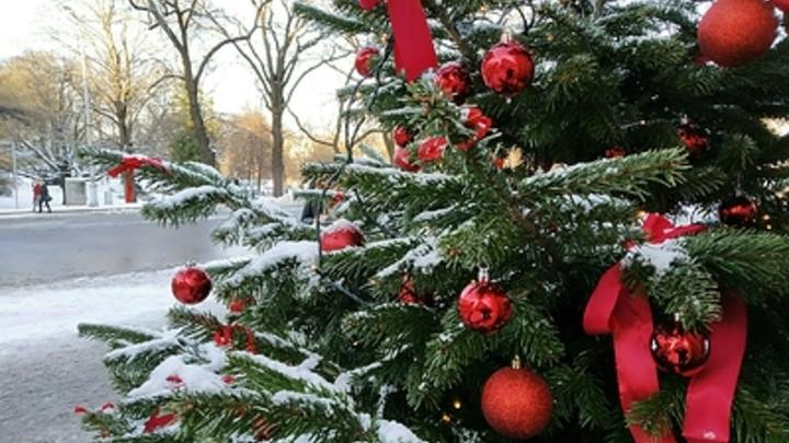 В Подмосковье могут отменить часть ковидных ограничений ради Нового года
