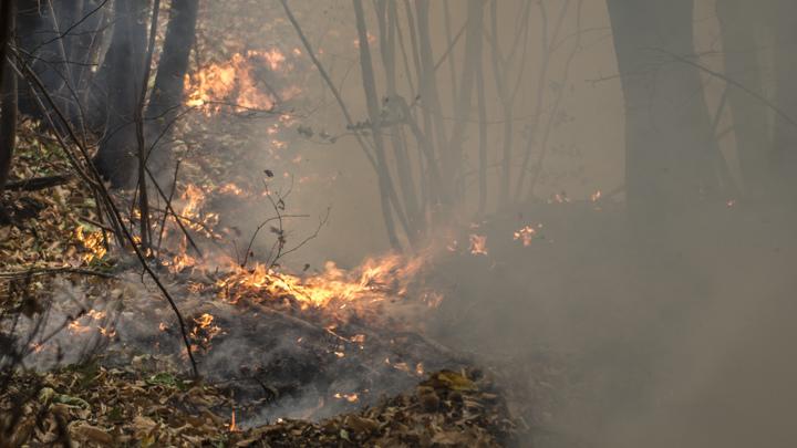 Жителям Курганской области запретили шашлыки: В регионе введён режим ЧС из-за пожаров