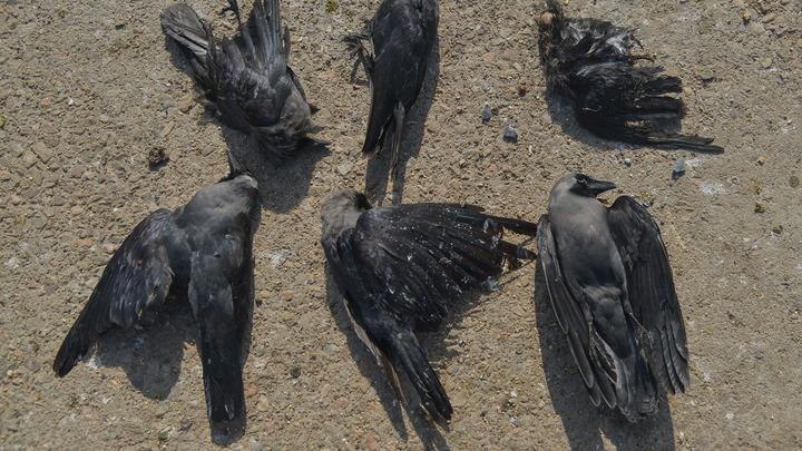 Дурной знак? В России заговорили о конце света после массовой гибели птиц