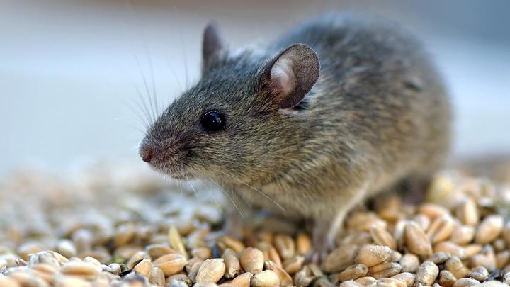 Мэрия Самары прокомментировала ситуацию в школе №73: «Мышь в раздевалку не проникала»