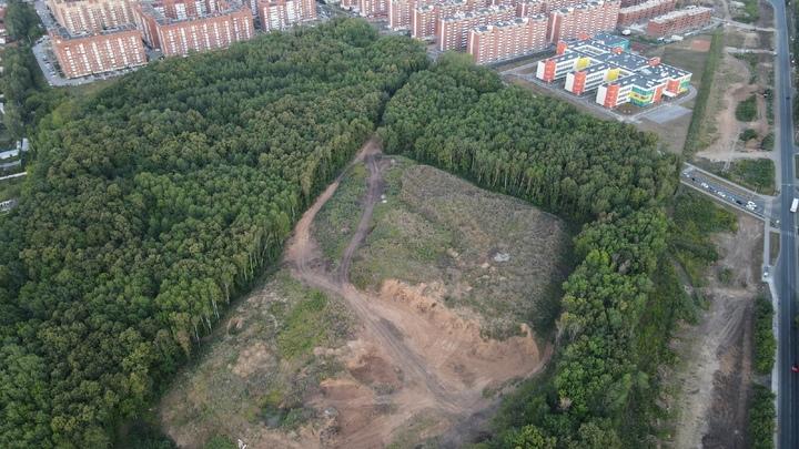 Это не лес! В мэрии ответили на обращение жителей Новой Самары к Бузовой
