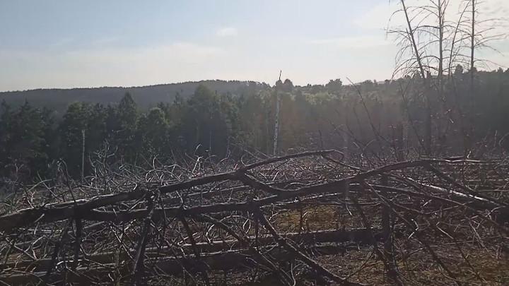 На старом угольном отвале в Новокузнецке обнаружили подземный пожар