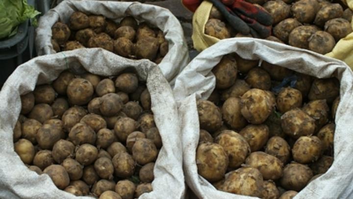 В Беларуси зафиксирован серьезный неурожай картошки