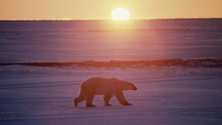 Поделить нефтяную шкуру полярного медведя: Россию обвинили в провокации битвы в Арктике