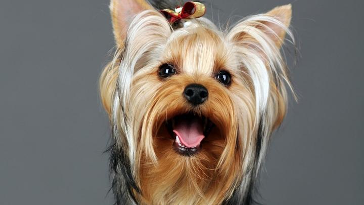 Из-за милой собачки хозяин получил по лицу от таксиста в Санкт-Петербурге
